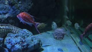 岩礁に住む生き物たち (名古屋港水族館) 2017年11月18日