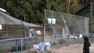 リャマ (福知山市動物園) 2019年11月24日