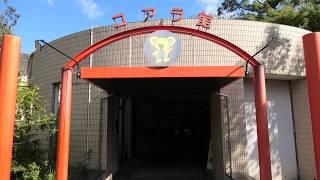 コアラ館 (天王寺動物園) 2019年11月20日