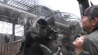ツキノワグマのペロペロタイム (大宮公園小動物園) 2018年2月4日