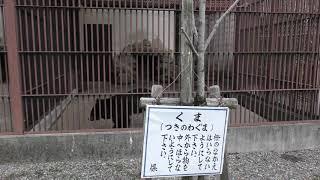 ツキノワグマ (龍野公園 動物園) 2019年2月13日