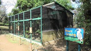 カンムリシロムク舎 (埼玉県こども動物自然公園) 2020年9月15日