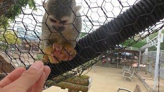 Squirrel Monkey & Lemur (Torius Friendly Zoo, Fukuoka, Japan) April 23, 2019