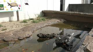 ビオトープエリア (碧南海浜水族館) 2019年11月2日