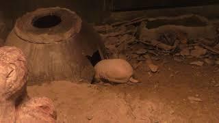 マタコミツオビアルマジロ (東山動植物園) 2017年11月18日