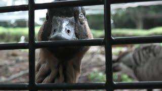 Flamingo (Saitama Children's Zoo, Saitama, Japan) September 15, 2020