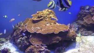サンゴ礁水槽 (鳥羽水族館) 2018年1月1日