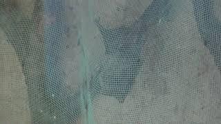 アブラコウモリ (多摩動物公園) 2019年1月18日