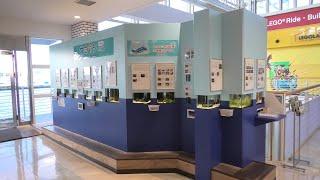 ウミウシminimini水族館 (天保山マーケットプレース) 2019年11月20日