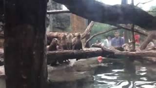 侵入してきた虫に興味津々なコツメカワウソ (多摩動物公園) 2017年8月27日
