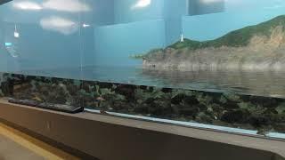 能登と海と (のとじま水族館) 2019年8月17日