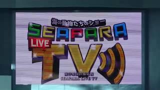 海の動物たちのショー「SEAPARA LIVE TV」前半のみ (八景島シーパラダイス) 2018年1月7日