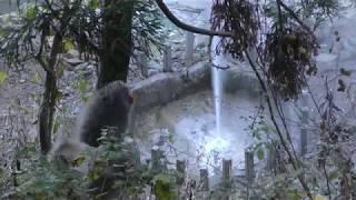 渋の地獄谷噴泉 と ニホンザル (地獄谷野猿公苑) 2018年11月3日