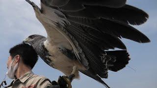 フリーフライトバードショーパフォーマンス Wings [1/6] (神戸どうぶつ王国) 2021年3月29日
