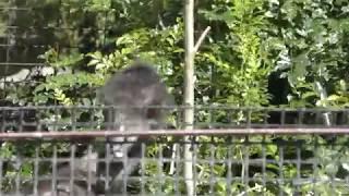 エミューの『ブブ』と『ボンボン』 (高知県立のいち動物公園) 2018年3月24日