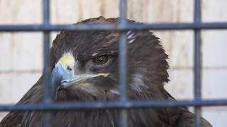 鳥舎 (みさき公園) 2020年1月19日