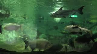 ジャングル水槽 (新屋島水族館) 2019年2月28日