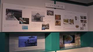 第31回 水族企画展示「ビワマスと仲間たち」 (琵琶湖博物館 水族展示室) 2019年10月30日
