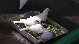 フライングケージ (茶臼山動物園) 2018年11月4日