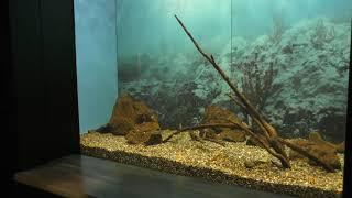 6-1 最古の湖 バイカル湖 (琵琶湖博物館 水族展示室) 2019年10月30日