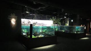 パンタナル水槽 (カワスイ 川崎水族館) 2020年9月16日