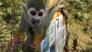 Squirrel Monkey Forest (Nagasaki Biopark, Nagasaki, Japan) December 23, 2017