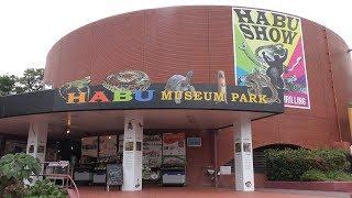 エラブウミヘビ (おきなわワールド・ハブ博物公園) 2019年5月13日