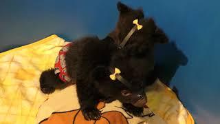 抱っこ待機中の赤ちゃん熊 (奥飛騨クマ牧場) 2018年4月21日