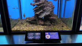 『子守をする魚』水槽 (串本海中公園 水族館) 2018年12月27日