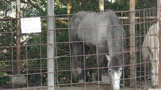 乗馬コーナー (渋川動物公園) 2019年2月26日