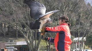 Bird performance show (Kanzaki Farm Park Yodel Forest, Hyogo, Japan) March 29, 2019