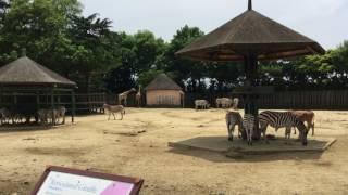 グラントシマウマとエランド (東武動物公園) 2017年6月11日