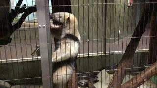 ミナミコアリクイ(上野動物園) 2017年8月9日