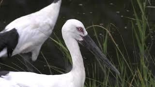 水辺の鳥 (葛西臨海水族園・夜の不思議の水族園) 2018年8月16日