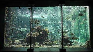 『串本の海』水槽 (串本海中公園 水族館) 2018年12月27日