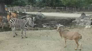 アフリカゾーン (群馬サファリパーク) 2018年11月10日