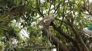 フクロウの住む森 (伊豆シャボテン動物公園) 2018年4月22日
