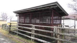 ツキノワグマ (国立公園 九重やまなみ牧場) 2019年12月6日