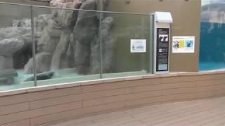 カリフォルニアアシカ と「けものフレンズ」パネル (サンシャイン水族館) 2018年5月10日