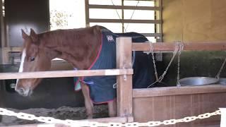 厩舎 (島根県畜産技術センター 動物ふれあい広場) 2019年11月30日