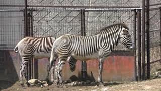サバンナエリア (盛岡市動物公園) 2019年4月12日