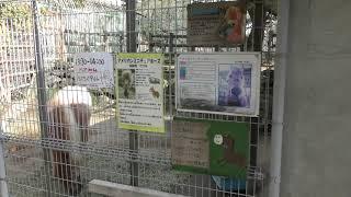 ミニチュアホース (和歌山城公園 動物園) 2018年12月24日