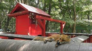 御金稲荷神社 (宮城蔵王キツネ村) 2019年8月13日