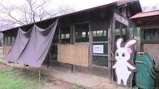 Rabbit house (NARITA DREAM FARM, Chiba, Japan) September 12, 2020