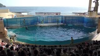 イルカ・アシカショー「きずな/kizuna」 (新江ノ島水族館) 2018年8月26日