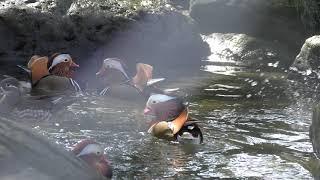 水鳥舎 (足羽山公園遊園地) 2019年11月1日