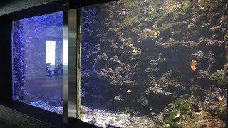『サンゴの海の魚』水槽 (串本海中公園 水族館) 2018年12月27日