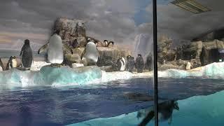 ペンギン水槽 (名古屋港水族館) 2017年11月18日