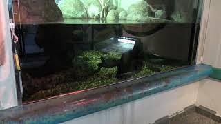 世界のさかな館「オオサンショウウオ」 (神戸市立須磨海浜水族園) 2018年12月21日