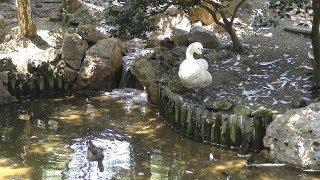 水鳥たちの池 (いしかわ動物園) 2019年8月18日